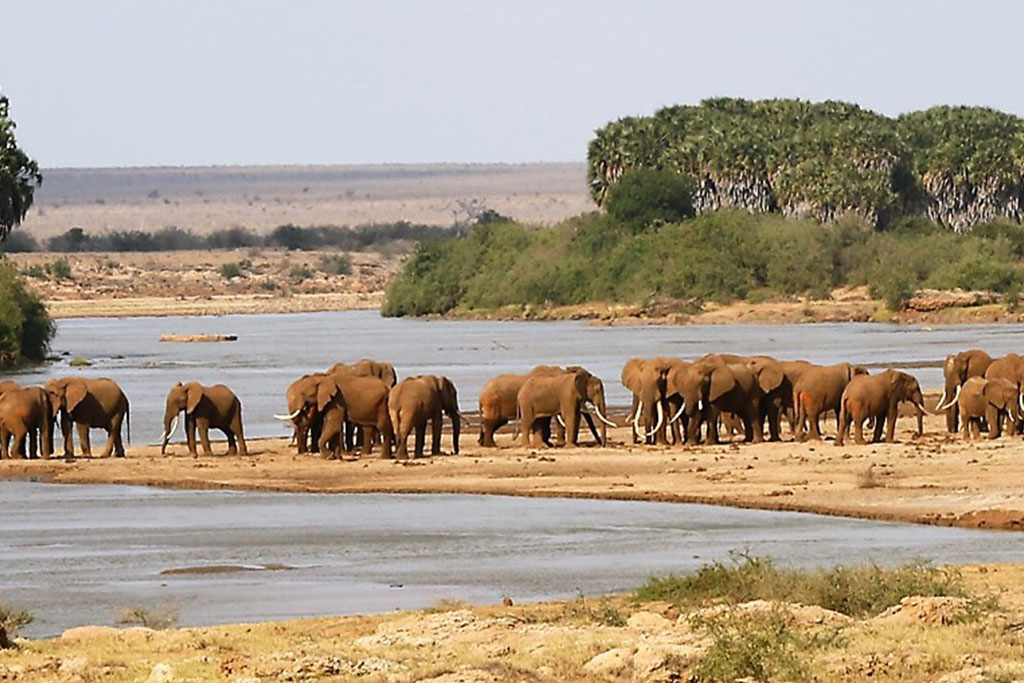 Image result for tsavo west